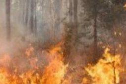 BPBD Sumsel pantau perkembangan hotspot cegah bencana asap