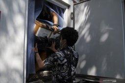 Bea Cukai Palembang Gagalkan Penyelundupan 225.664 Ekor Benih Lobster