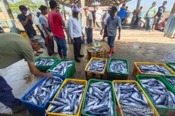 Dongkrak harga ikan, nelayan Aceh Timur  butuh cold stroge kapasitas 100-300 ton thumbnail