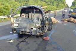 L300 Pick Up hantam tiga kerbau di Aceh Jaya, pengemudi dilarikan ke Rumah Sakit thumbnail