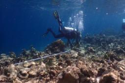 KKP siapkan klaim kerugian rusaknya terumbu karang Raja Ampat akibat kapal KM Sabuk Nusantara