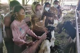 Usaha menjanjikan, Wabup Seruyan dorong warga ternak kambing