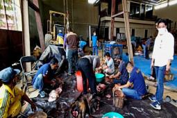 Hari kedua, Dinas PUPR Barut potong enam ekor  sapi kurban