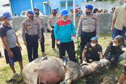 Polairud Polres Lamtim kurban satu ekor kerbau di kampung nelayan