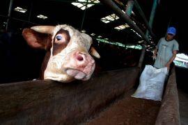 Pemotongan ternak di RPH Pekanbaru meningkat tiga kali lipat