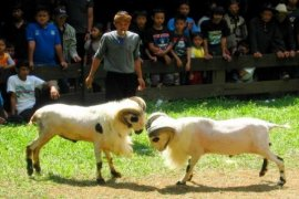 Disnak kembali gelar Kontes Ternak Jawa Barat ke-37