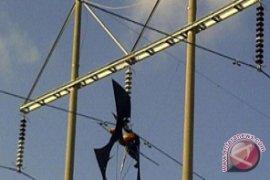 Layangan Sempat Padamkan Aliran Listrik PLN di Sanur