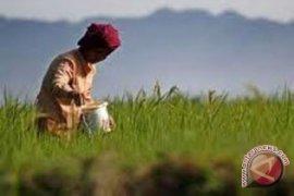 Umat Katolik Magelang peringati hari pangan sedunia