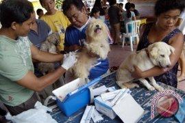 Mukomuko beli 30 kiur vaksin anti rabies