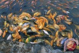 Enam desa dijadikan pembibitan ikan air tawar