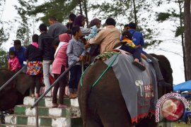 Gajah pantai panjang dialihkan ke PLG seblat