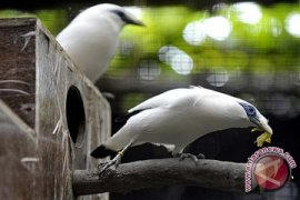 Jenis burung Indonesia bertambah jadi 1.777 macam