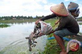 Dispertan Rejang Lebong siapkan bantuan benih ikan