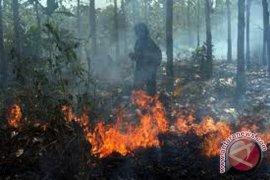 Lahan gambut di Mukomuko terbakar