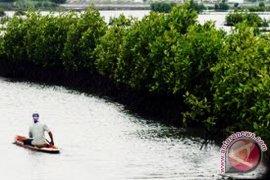 Wisata kayak hutan bakau diminati wisatawan