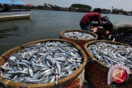 Harga ikan Nila di Jambi naik
