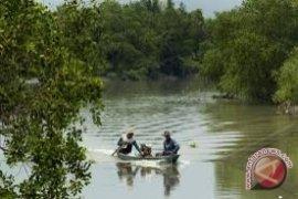 Amerika dan Pemkab Kubu Raya Kerja Sama Konservasi Mangrove