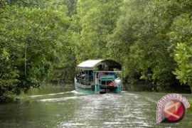 "Pemkot Balikpapan Jadikan ""Mangrove"" untuk Kawasan Wisata"