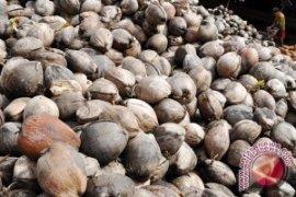 Kelapa Dalam Jawai Diekspor Ke Thailand - Tiongkok