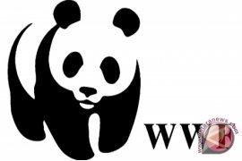 WWF Dampingi petani sawit Sintang sertifikasi RSPO
