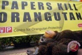 COP: Bumitama Harus Berhenti Mengancam Orangutan