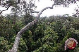 Gubernur Kalbar Ajak Jaga Hutan Kapuas Hulu