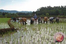 Bengkulu usulkan dana rawan pangan Rp1,8 miliar