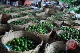 Petani Jeruk Di Sambas Keluhkan Harga Turun