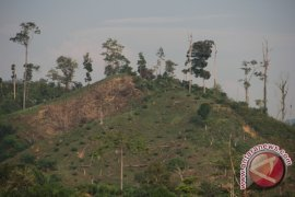 BKSDA amankan tujuh perambah Bukit Kaba