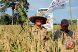 Tanah Bumbu boosts rice production to support food self-sufficiency
