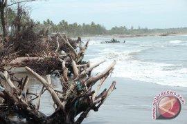 Pantai rawan abrasi jadi sasaran penghijauan