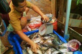 Pemkab tabur bibit  ikan  di desa terpencil