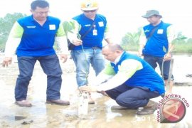 Pertamina EP Sangatta Tanam 2.500 Mangrove
