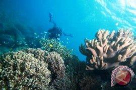 Pertamina peduli pelestarian terumbu karang pulau Pombo