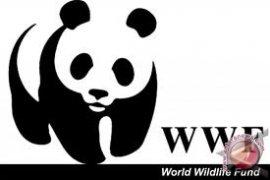 WWF Gelar Jajak Pendapat Soal Isu Lingkungan