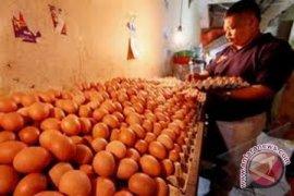 Guru Besar IPB: Telur Bisa Produksi Antibodi