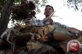 Meningkatkan pendapatan dengan kepiting bakau