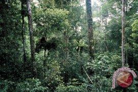 Inhutani III Masih Miliki Lahan 27.500 Hektare
