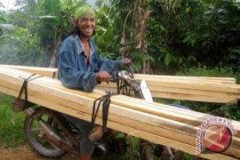 Penambangan Rambah Hutan Lindung