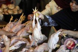 Permintaan Daging Ayam Naik Seribu Ton