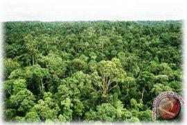 Menhut kunjungi hutan desa Serapung-Segamai Riau