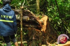 Polhut TNKS musnahkan pondok perambah hutan