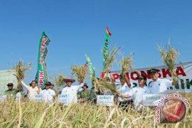 Pupuk Indonesia Tingkatkan Produksi Padi