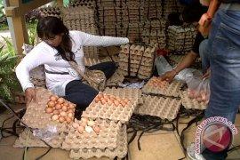 Dinas Peternakan Kalbar Datangkan Telur Dari Kalsel