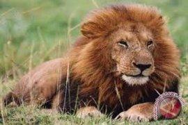 Tri Siswo: Saya kaget dengar harimau dan singa di Taman Rimba mati