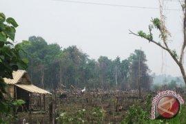 Dishut: Bengkulu bebas kebakaran hutan dan lahan