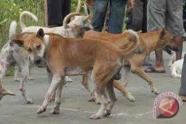 Porbi Mukomuko dukung pemusnahan anjing liar