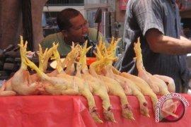 Harga ayam-ikan di Bengkulu bertahan tinggi