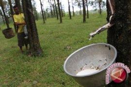 Bantuan Perluasan Lahan Karet Petani Babel Dikurangi