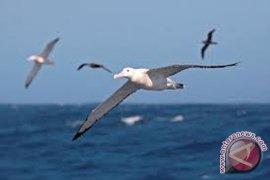 Burung laut dan Singa laut tercemar bikin heran para ahli